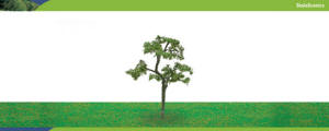 Model Railway Shop - Hornby Scalescenics - Beech Tree (125mm) - R8925