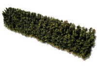 Javis - Woodland and Garden Hedges (165mm) - JHEDGE48