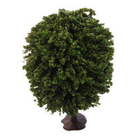 Javis Model Trees - Small Oak Tree - JT14